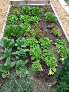 greens-in-garden